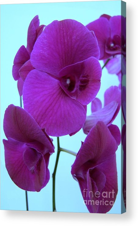 Orchid Acrylic Print featuring the photograph Purple Orchids 3 by Mary Deal