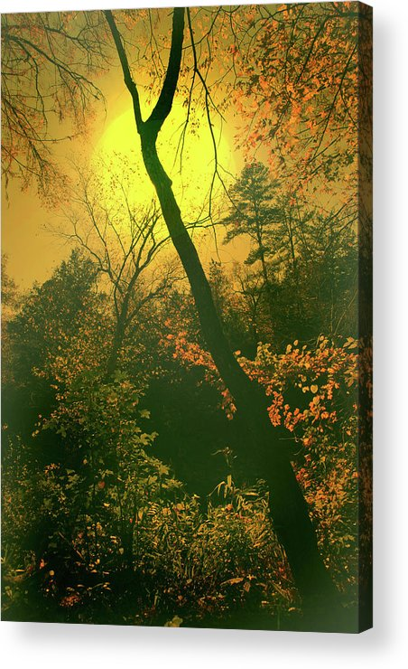 Sun Acrylic Print featuring the photograph Radiant by Nina Fosdick