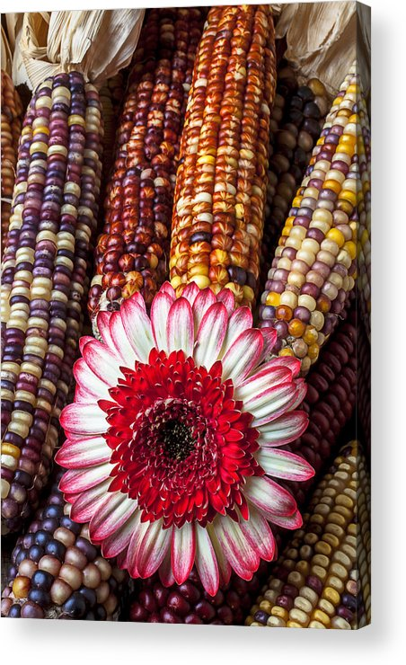 Indian Acrylic Print featuring the photograph Red And White Mum With Indian Corn by Garry Gay