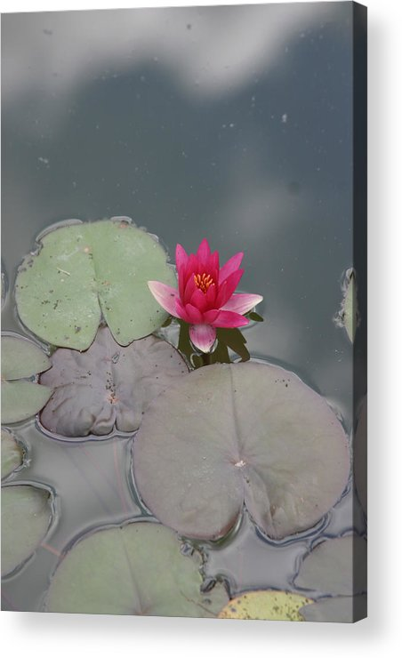 Lilly Acrylic Print featuring the photograph Red Lilly by Dervent Wiltshire