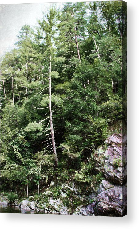 Rocky Hillside Acrylic Print featuring the photograph Mountain - Landscape - Trees - Rocky Hillside by Barry Jones