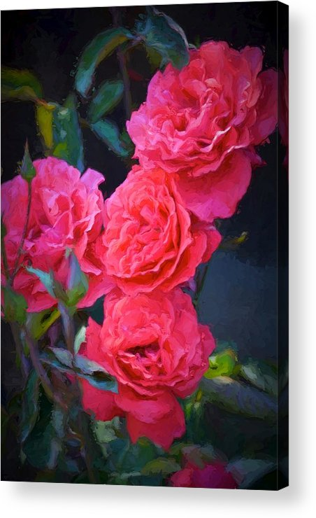 Floral Acrylic Print featuring the photograph Rose 138 by Pamela Cooper