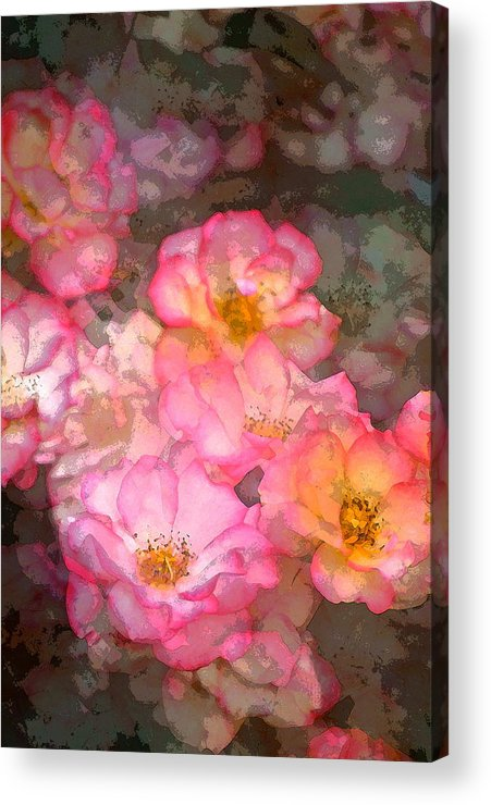 Floral Acrylic Print featuring the photograph Rose 210 by Pamela Cooper