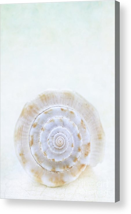 Aquatic Acrylic Print featuring the photograph Sea Shell by Stephanie Frey