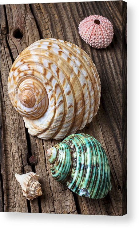 Sea Shell Acrylic Print featuring the photograph Sea Shells With Urchin by Garry Gay