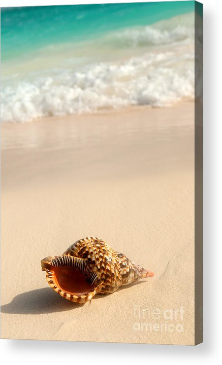 Seashell Acrylic Print featuring the photograph Seashell And Ocean Wave by Elena Elisseeva