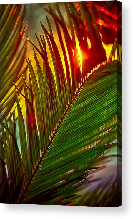 Palm Acrylic Print featuring the photograph Sego Frond Fire by Scott Campbell