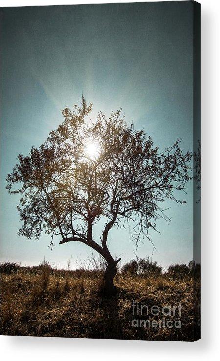 Dark Acrylic Print featuring the photograph Single Tree by Carlos Caetano