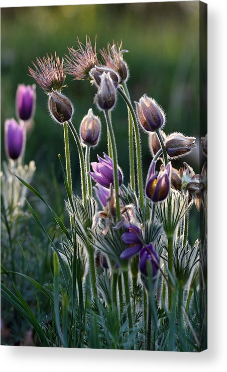 Paschal Flowers Acrylic Print featuring the photograph Spring Remembered by Theo OConnor