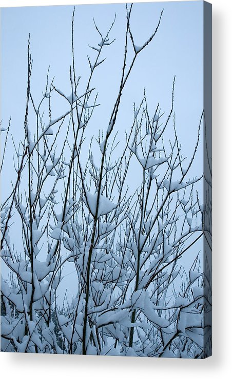 Stark Acrylic Print featuring the photograph Stark Beauty - Snow On Branches by Denise Beverly