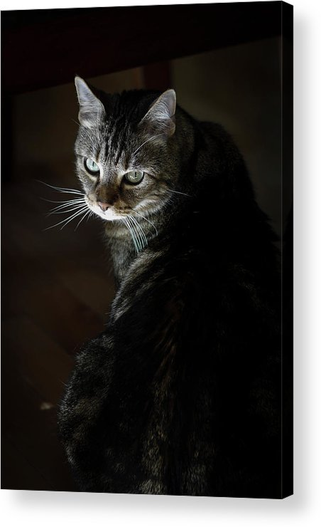Day Acrylic Print featuring the photograph Sunlight Hits Only The Face Of A Male by Al Petteway & Amy White