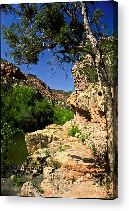Arizona Acrylic Print featuring the photograph Sycamore Canyon by Kathy McClure