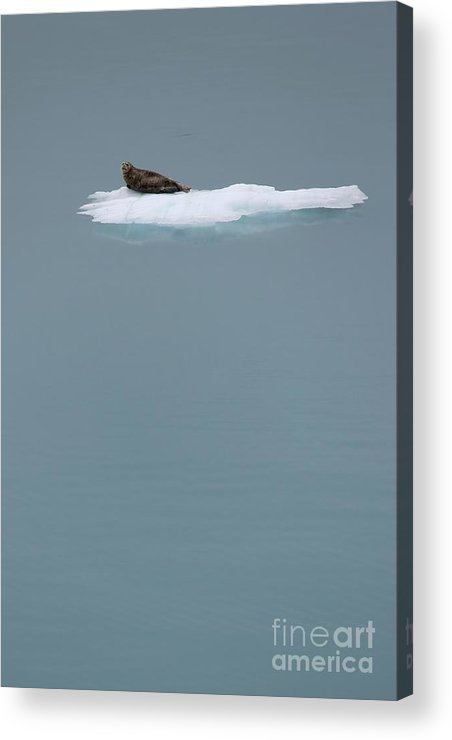 Animal Acrylic Print featuring the photograph The Drifter by Sophie Vigneault