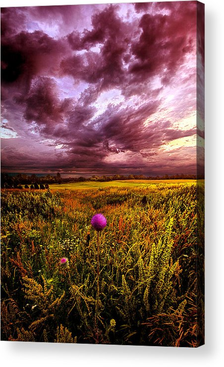 Thistle Acrylic Print featuring the photograph Time And Again by Phil Koch