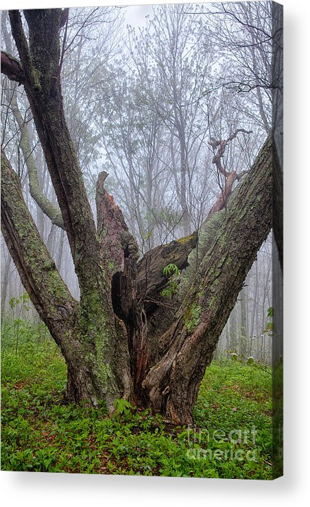 North Carolina Acrylic Print featuring the photograph Torn By Time I by Dan Carmichael