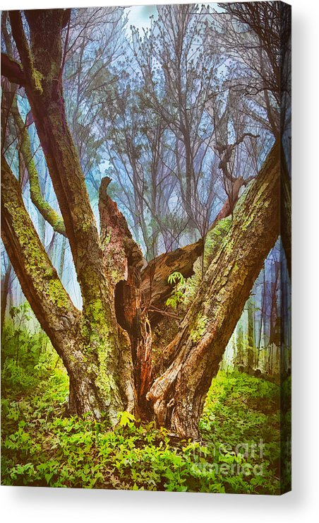 North Carolina Acrylic Print featuring the painting Torn By Time II by Dan Carmichael
