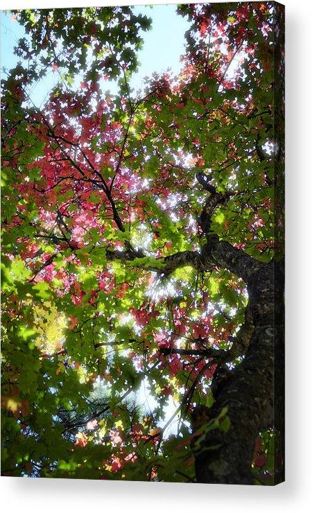 Tree Acrylic Print featuring the photograph Touches Of Autumn by Saija Lehtonen