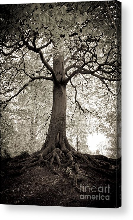 Tree Acrylic Print featuring the photograph Tree Of Life by Dominique De Leeuw