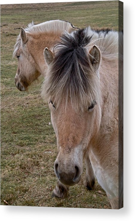 Two Heads Acrylic Print featuring the photograph Two Heads by Odd Jeppesen