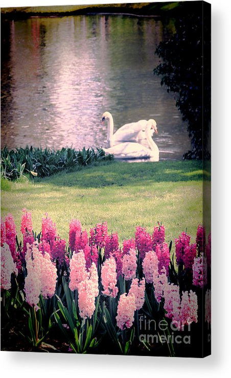 Swans Acrylic Print featuring the photograph Two Swans by Jasna Buncic