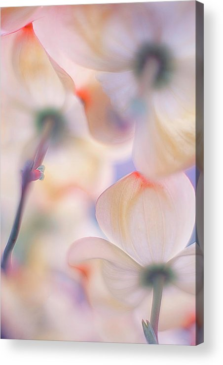 Flower Acrylic Print featuring the photograph Under The Skirts Of Flowers by Francois Casanova