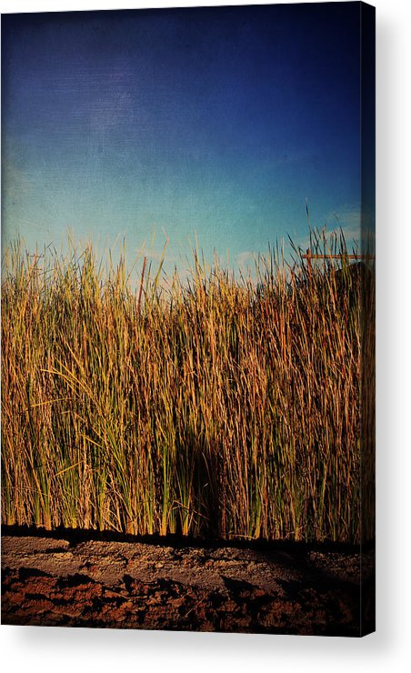 Niland Acrylic Print featuring the photograph Unexpected Things by Laurie Search