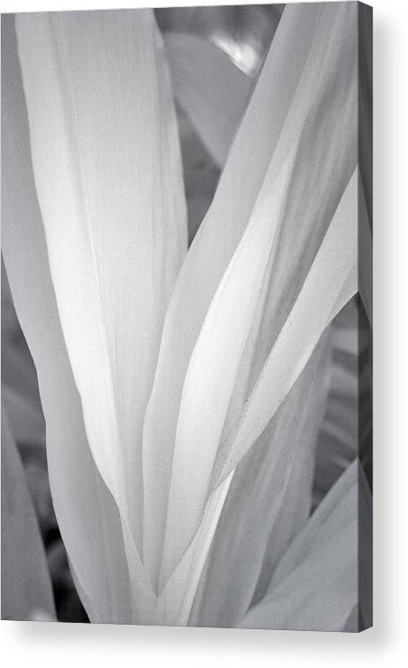 3scape Photos Acrylic Print featuring the photograph Veil by Adam Romanowicz