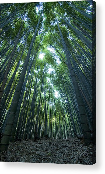 Bamboo Acrylic Print featuring the photograph Vertical Bamboo Forest by Aaron Bedell