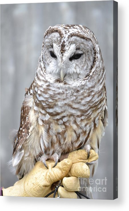 Vermont Acrylic Print featuring the photograph Whooooooo by Susan Russo