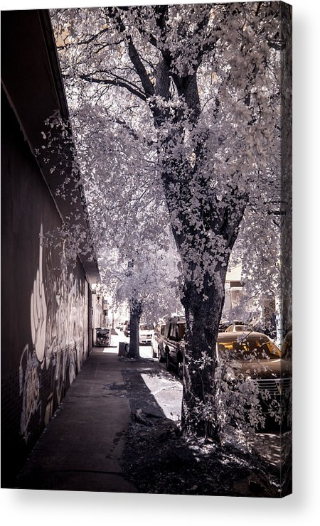 Infrared Photography Acrylic Print featuring the photograph Wynwood Treet Shadow by Ellie Perla