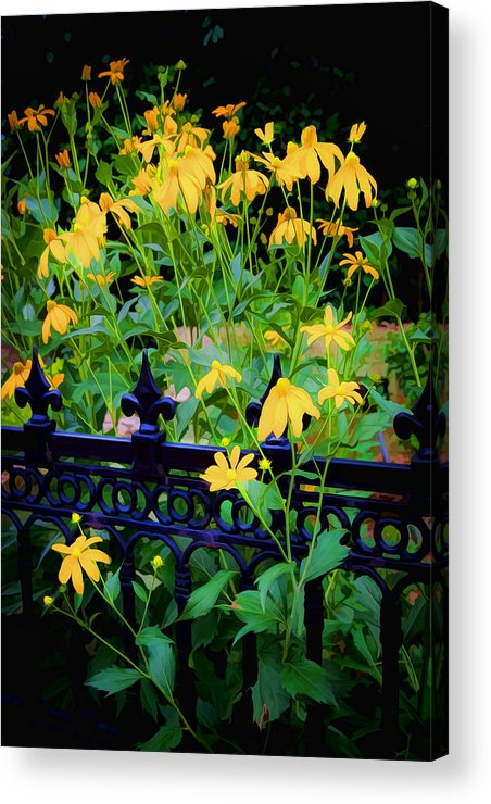 Echinacea Acrylic Print featuring the photograph Yellow Coneflowers Echinacea Wrought Iron Gate by Rich Franco