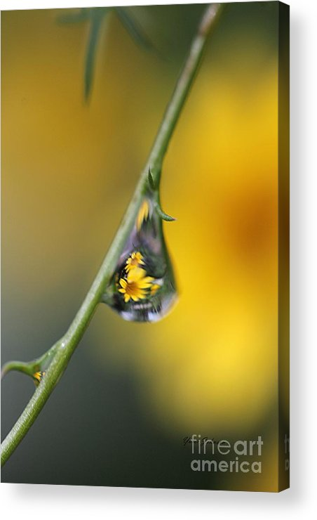 Dewdrops Acrylic Print featuring the photograph Yellow Dewdrop by Yumi Johnson