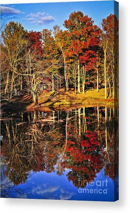 Lake Acrylic Print featuring the photograph Fall Forest Reflections by Elena Elisseeva