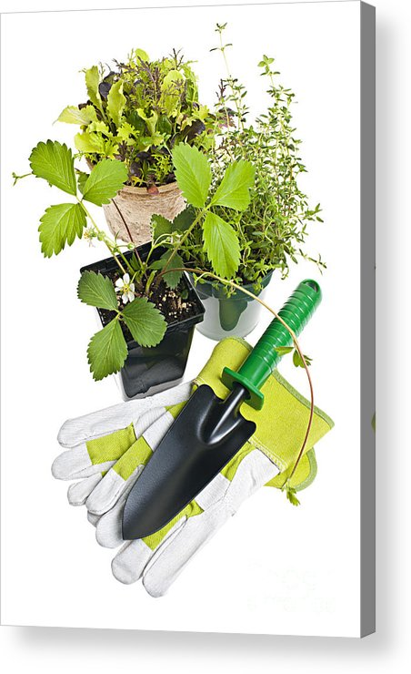 Gardening Acrylic Print featuring the photograph Gardening Tools And Plants by Elena Elisseeva