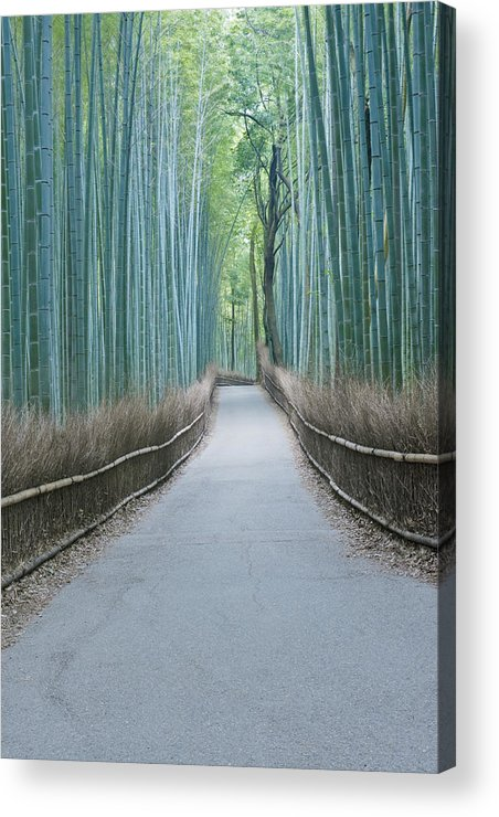 Photography Acrylic Print featuring the photograph Japan Kyoto Arashiyama Sagano Bamboo by Rob Tilley