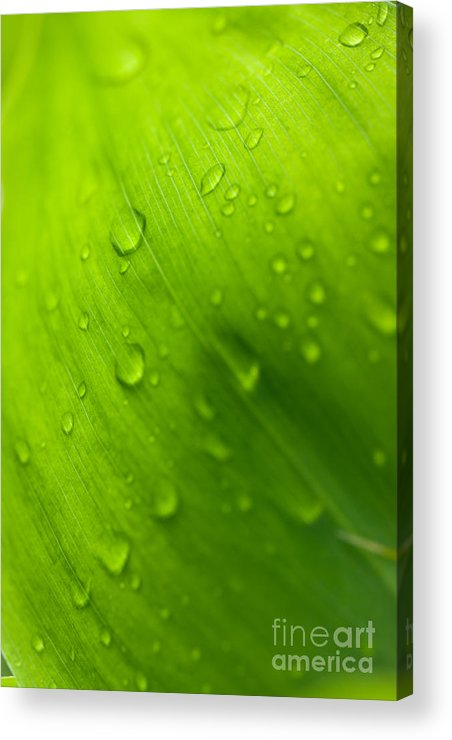 Green Acrylic Print featuring the photograph Morning Dew by Johan Larson