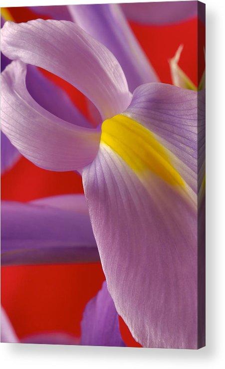 Flowers Acrylic Print featuring the photograph Photograph Of A Dutch Iris by Perla Copernik