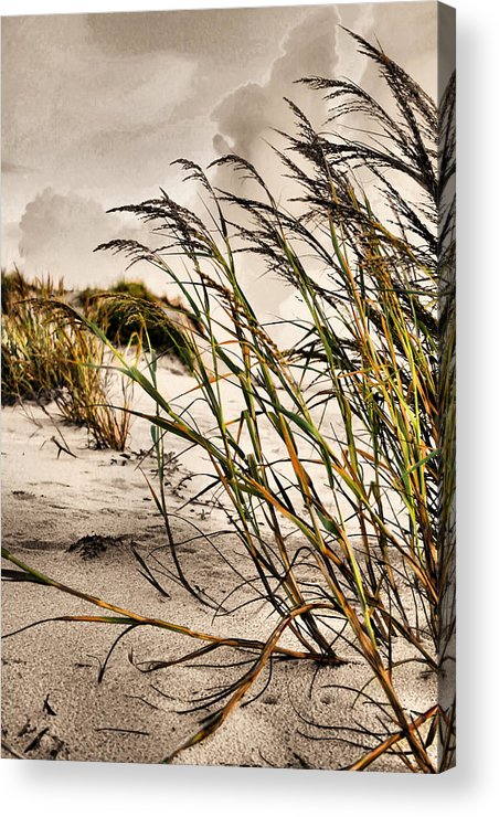 Sea Oats Acrylic Print featuring the photograph Sea Oats by Kristin Elmquist