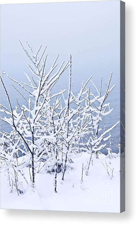 Winter Acrylic Print featuring the photograph Snowy Trees by Elena Elisseeva