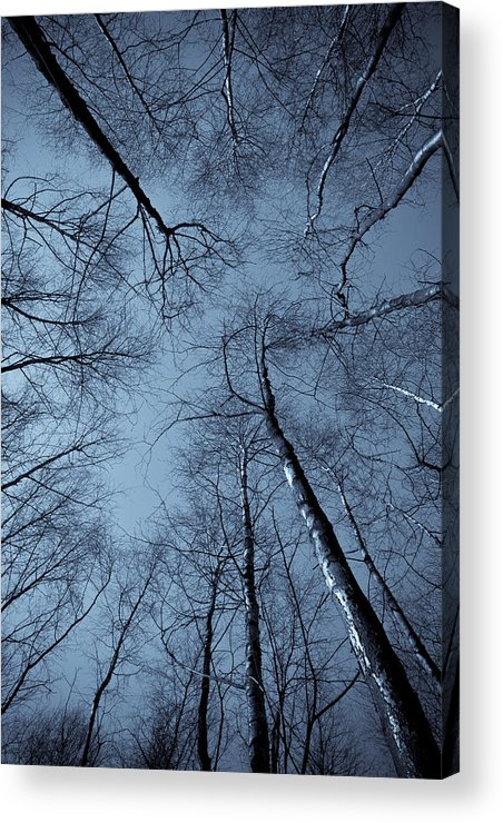 Epping Acrylic Print featuring the photograph Epping Forest Trees by David Pyatt