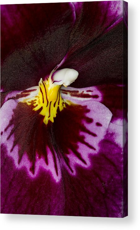 Orchid Acrylic Print featuring the photograph Exotic Orchids Of C Ribet by C Ribet