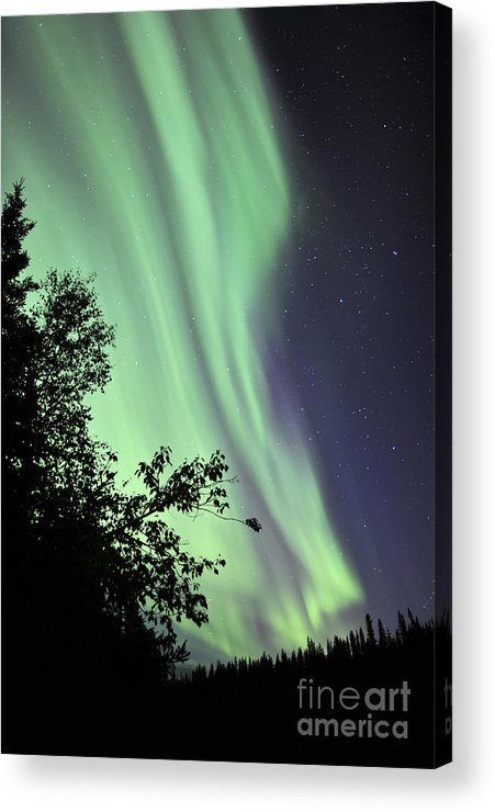 Yellowknife Acrylic Print featuring the photograph Aurora Borealis Above The Trees by Jiri Hermann