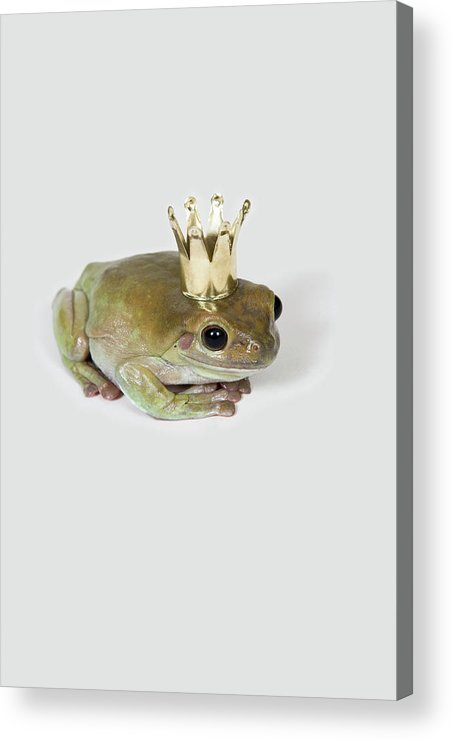 Vertical Acrylic Print featuring the photograph A Frog Wearing A Crown, Studio Shot by Paul Hudson