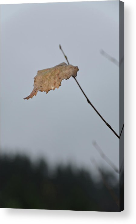 Autumn Acrylic Print featuring the photograph A Lonely Leaf by Michael Goyberg