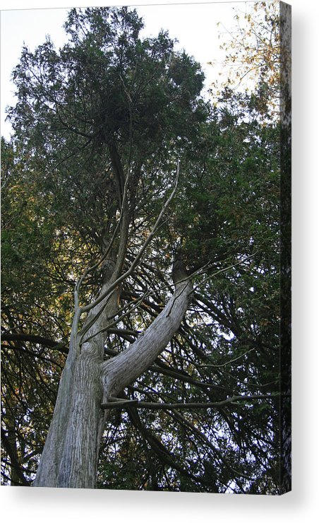 Cedar Photographs Acrylic Print featuring the photograph Admiration Two by Alan Rutherford