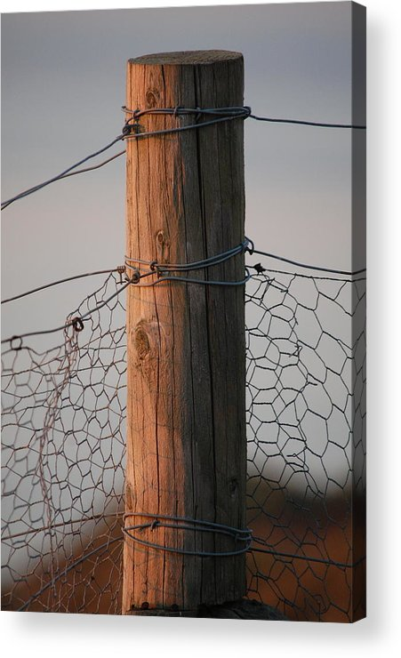 Dickon Acrylic Print featuring the photograph Afternoon Post by Dickon Thompson