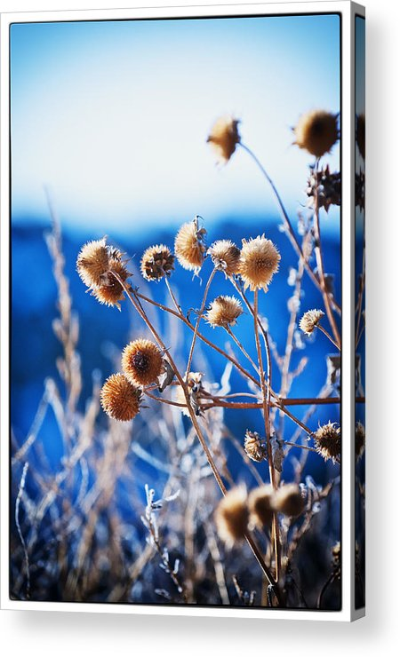 Nature Acrylic Print featuring the photograph Against The Blue Sky by Lisa Spencer