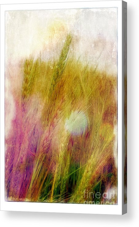 Field Acrylic Print featuring the photograph Another Field Of Dreams by Judi Bagwell