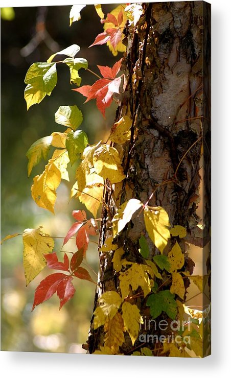 Autumn Acrylic Print featuring the photograph Autumn Colors by Living Color Photography Lorraine Lynch