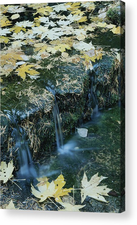 Geography Acrylic Print featuring the photograph Autumn Foliage Floats Upon The Surface by Marc Moritsch